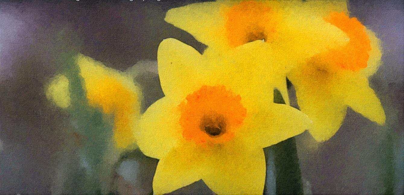 Daffodils - Ciaran Moore